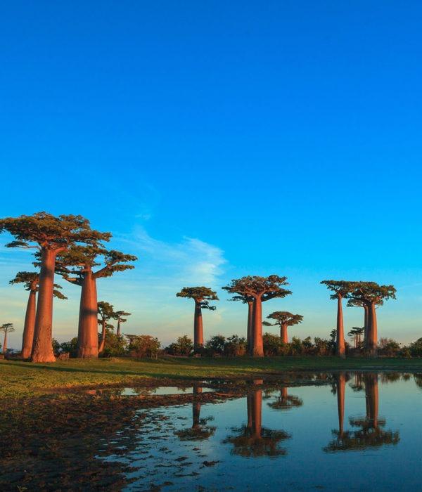 Voyage organisé Madagascar