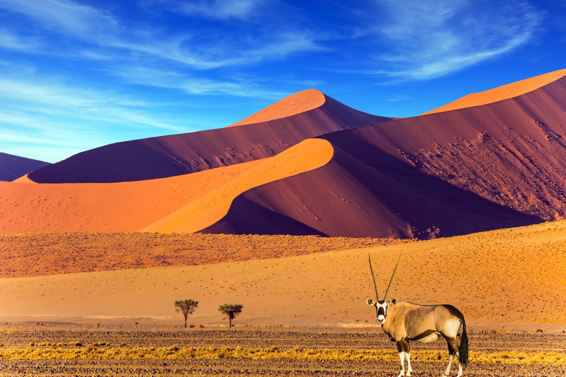 voyage organisé namibie